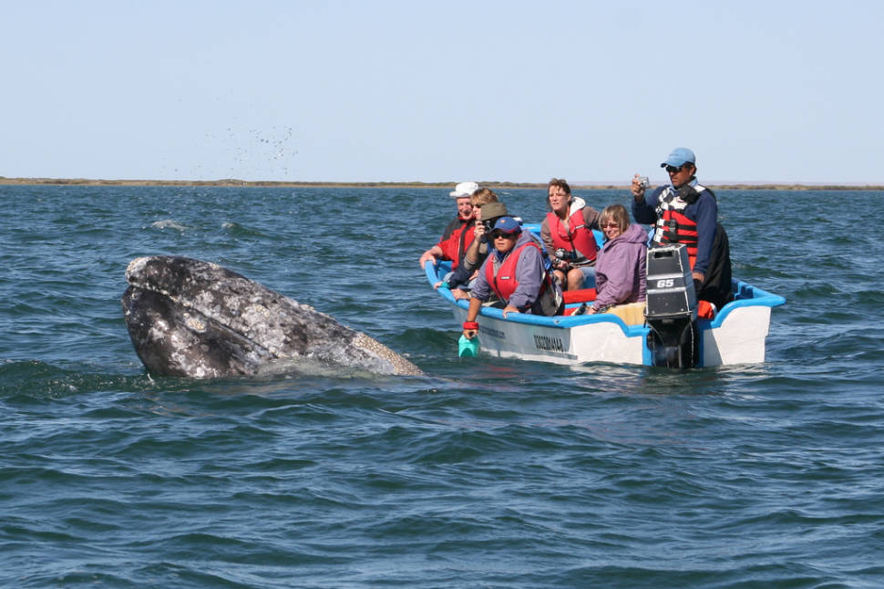 Best time for Whale Watching in Mexico