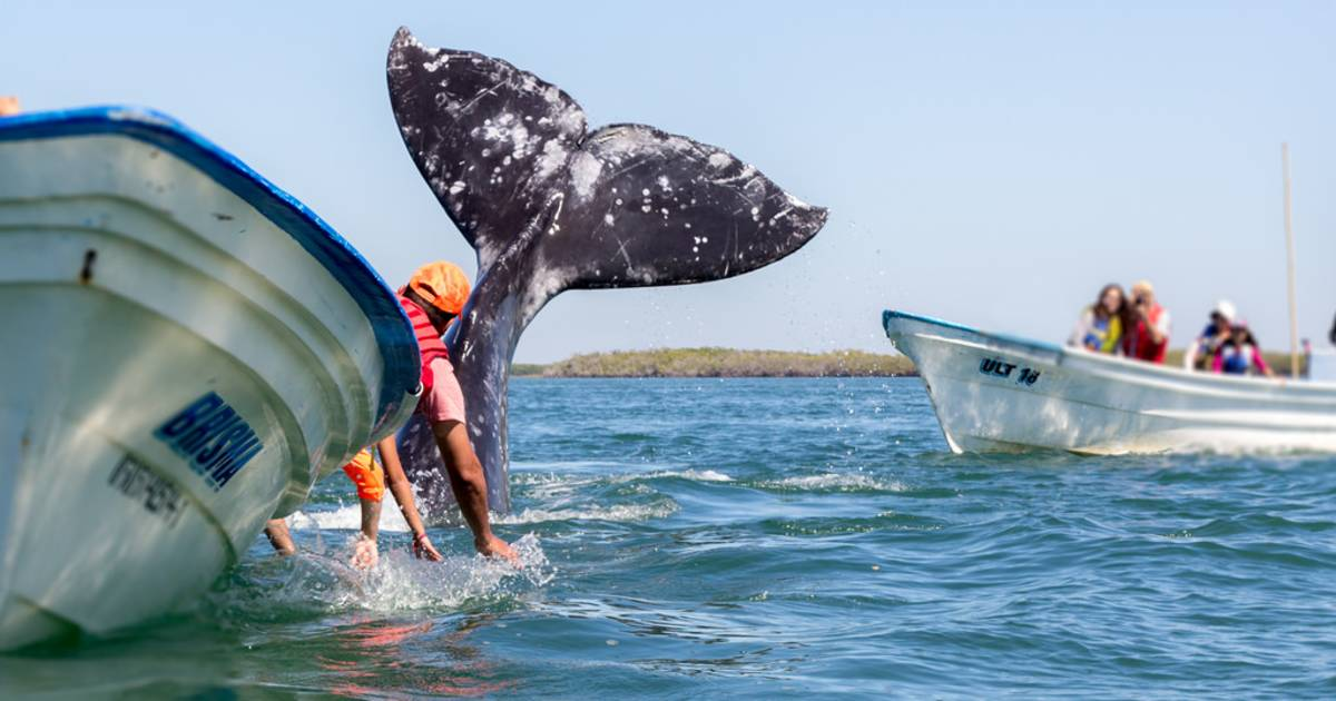 Whale Watching in Mexico - Best Time