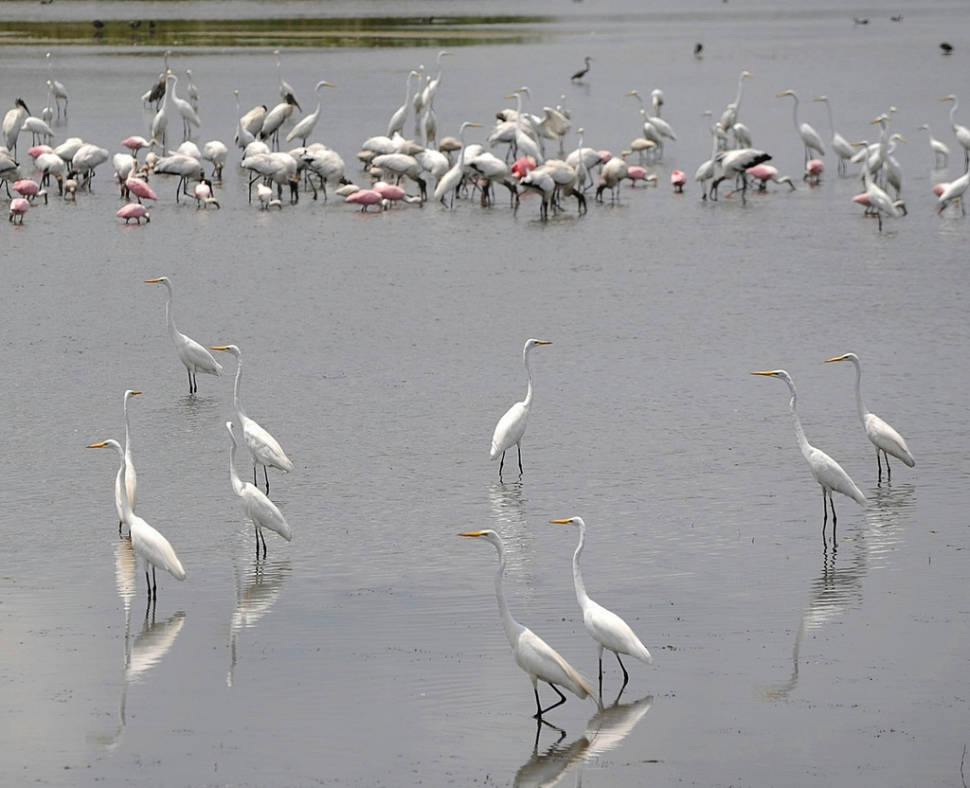 Best time for Everglades Boating Adventure