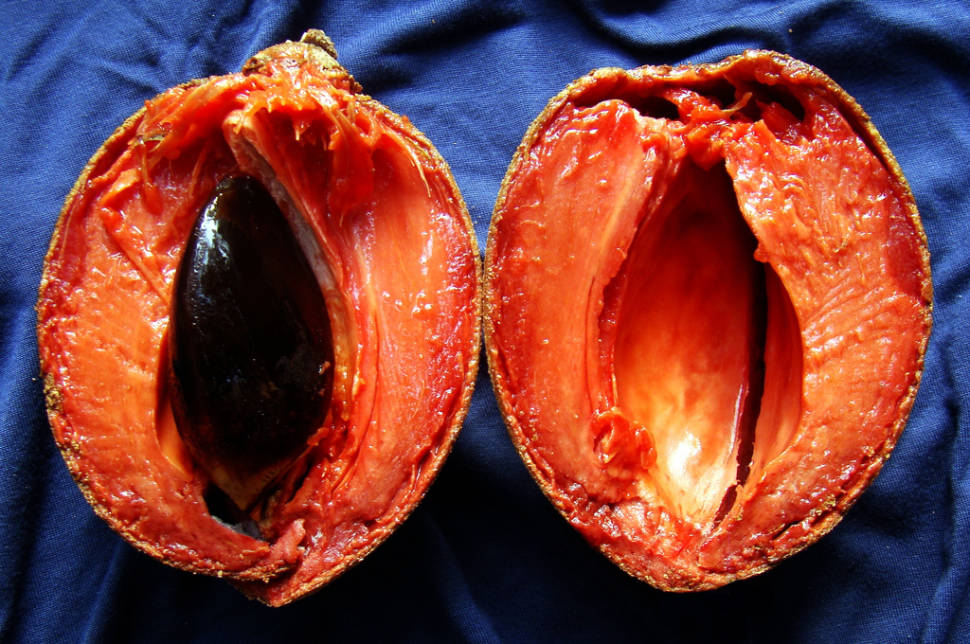 Mamey Sapote Harvest in Miami - Best Season