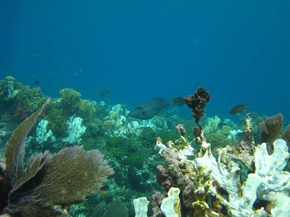 Scuba Diving and Snorkeling in Miami - Best Season
