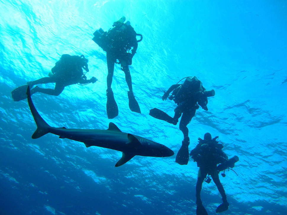 Scuba Diving and Snorkeling in Miami - Best Time
