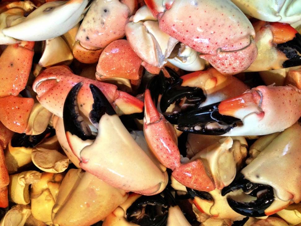 Stone Crab Season in Miami - Best Season