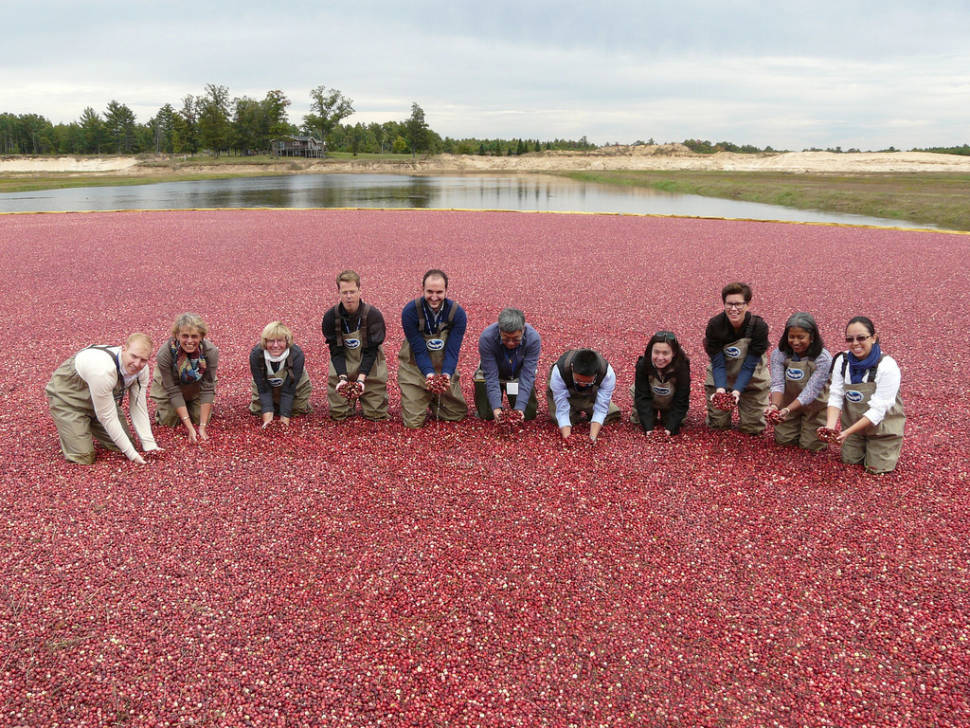 Best time for Wisconsin Cranberry Harvest in Midwest
