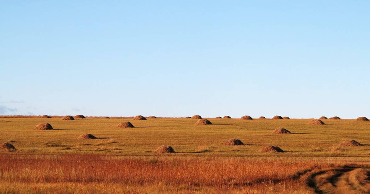 Hay Harvest in Mongolia - Best Time