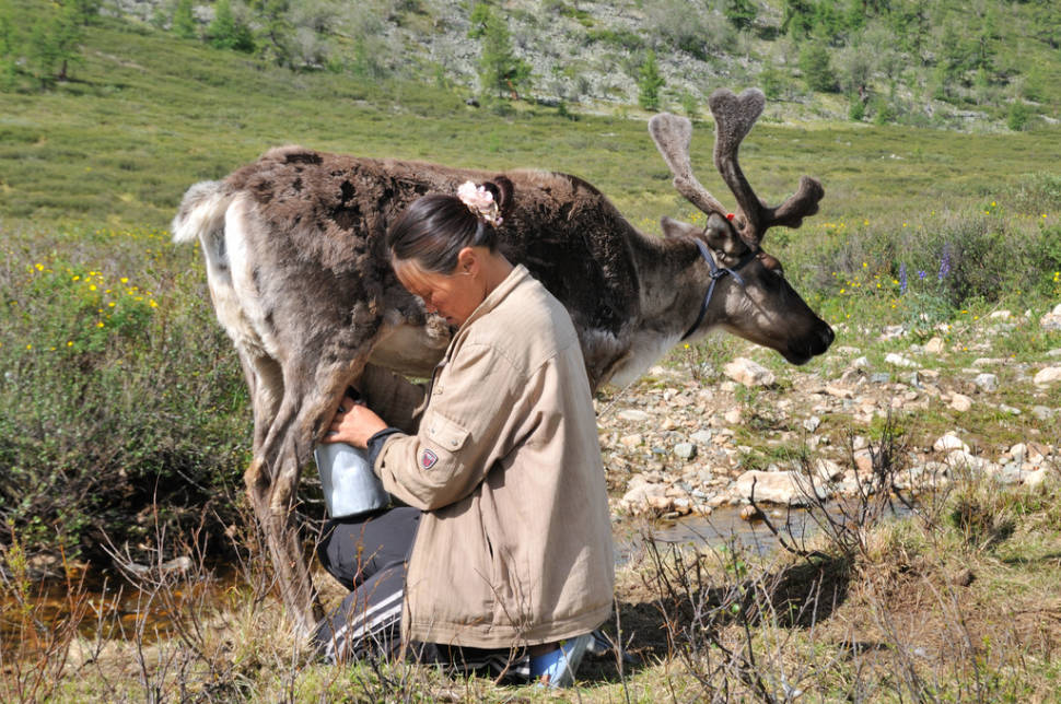 Best time for Visiting Tsaatan Tribe