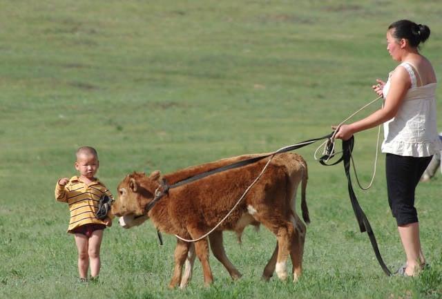 Babies in Mongolia