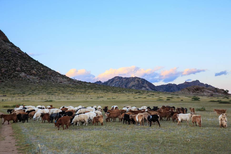 Wildlife Watching in Mongolia - Best Season