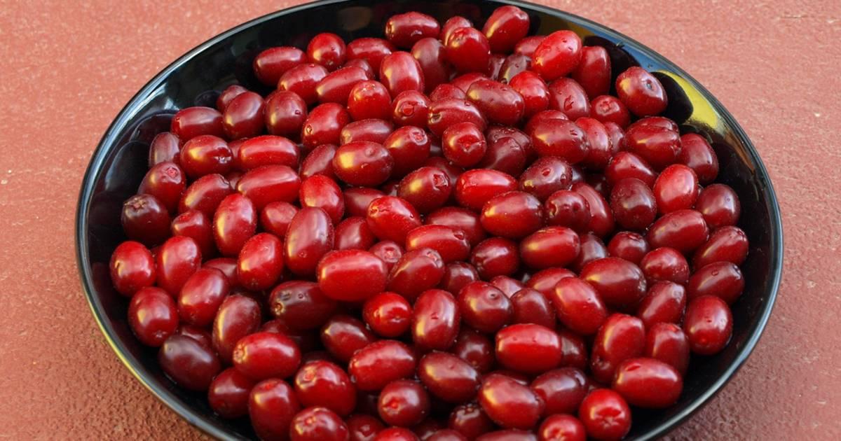 Cornelian Cherries or Drenjine in Montenegro - Best Time
