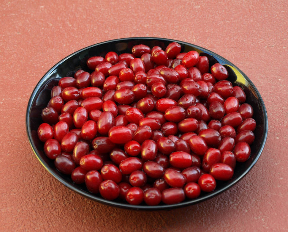 Cornelian Cherries or Drenjine in Montenegro - Best Time