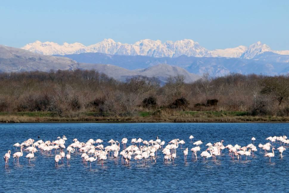 Flamingoes in Ulcinj in Montenegro - Best Season