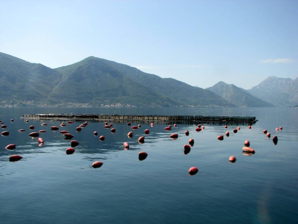 Mussels Season in Montenegro - Best Season