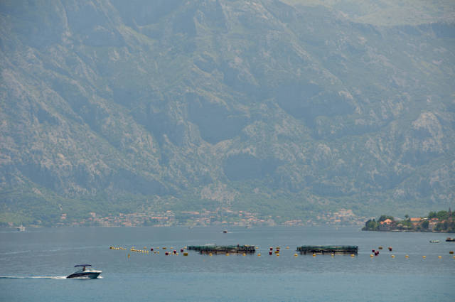 Best time for Mussels Season in Montenegro