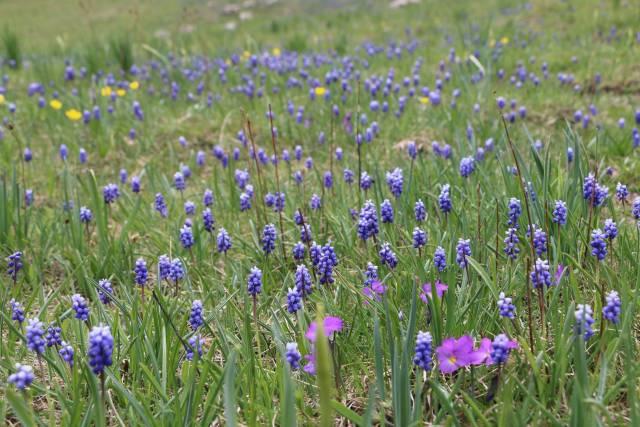 Wild Flowers in Montenegro - Best Time