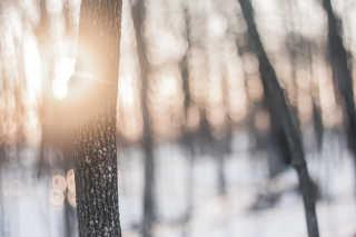 Winter Forest Treks