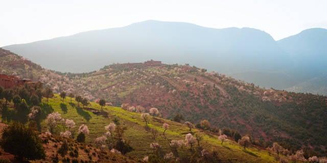 Almond Blossom Season in Morocco - Best Season