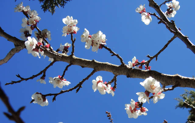 Best time for Almond Blossom Season in Morocco