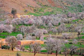 Almond Blossom Season
