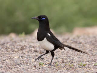 Birdwatching the Rare Species