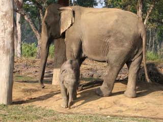 Safari at Chitwan National Park