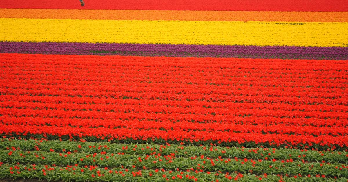 Keukenhof (Garden of Europe) in The Netherlands - Best Time
