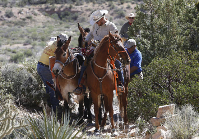 Horseback Riding through Red Rock Canyon in Nevada - Best Time