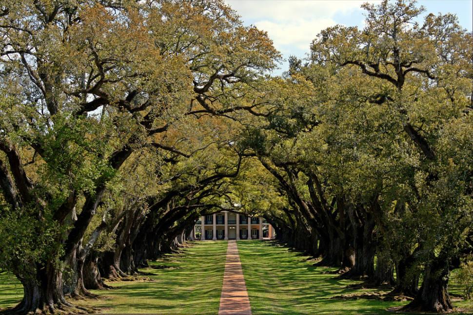 Plantation Pilgrimage in New Orleans - Best Time