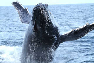 Whale Watching in NSW