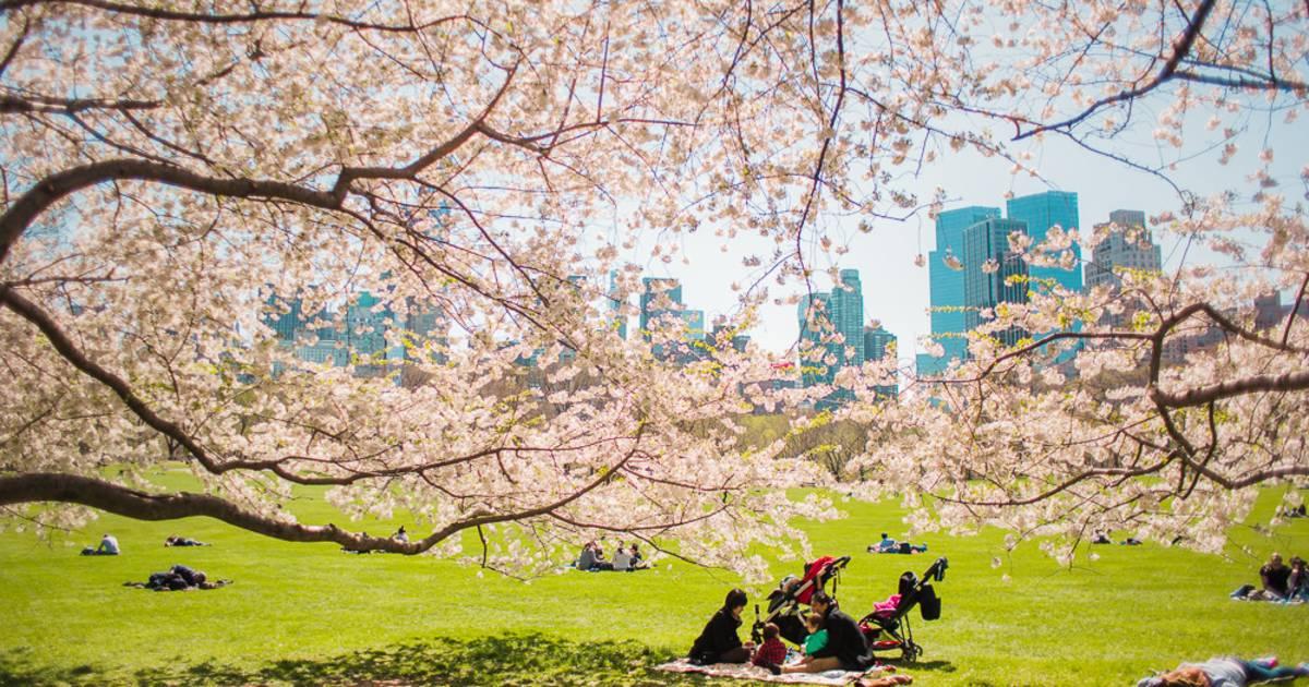 Picnic Season in Central Park in New York - Best Time