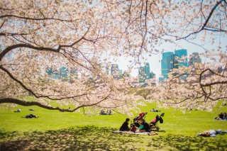 Picnic Season in Central Park