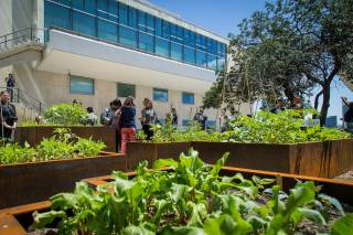Rooftop Gardens and Farms