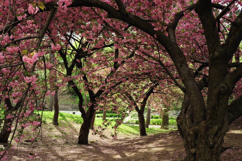 Spring in New York - Best Time