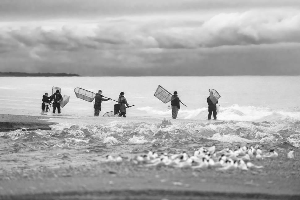 Catching Whitebait in New Zealand - Best Season