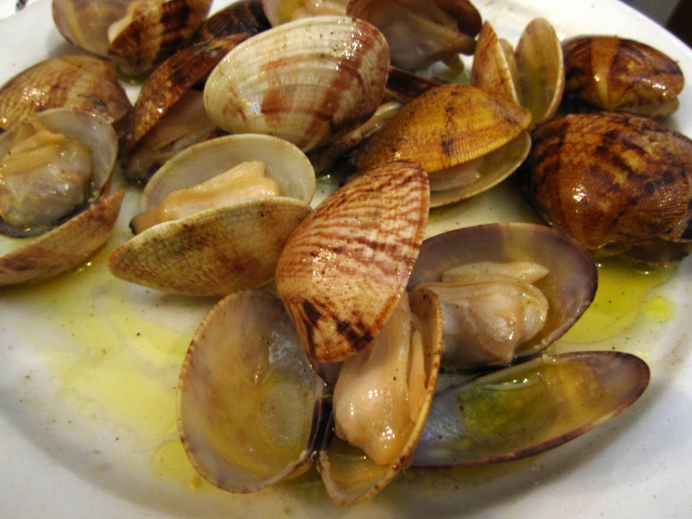 Clams in New Zealand - Best Season