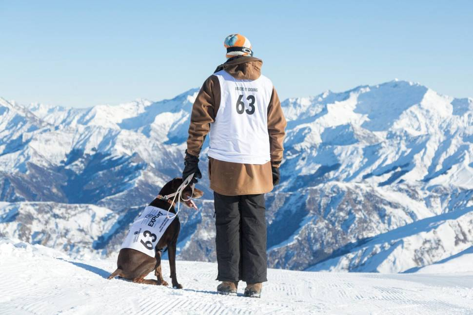 Best time to see Monteith's Dog Derby in Queenstown in New Zealand