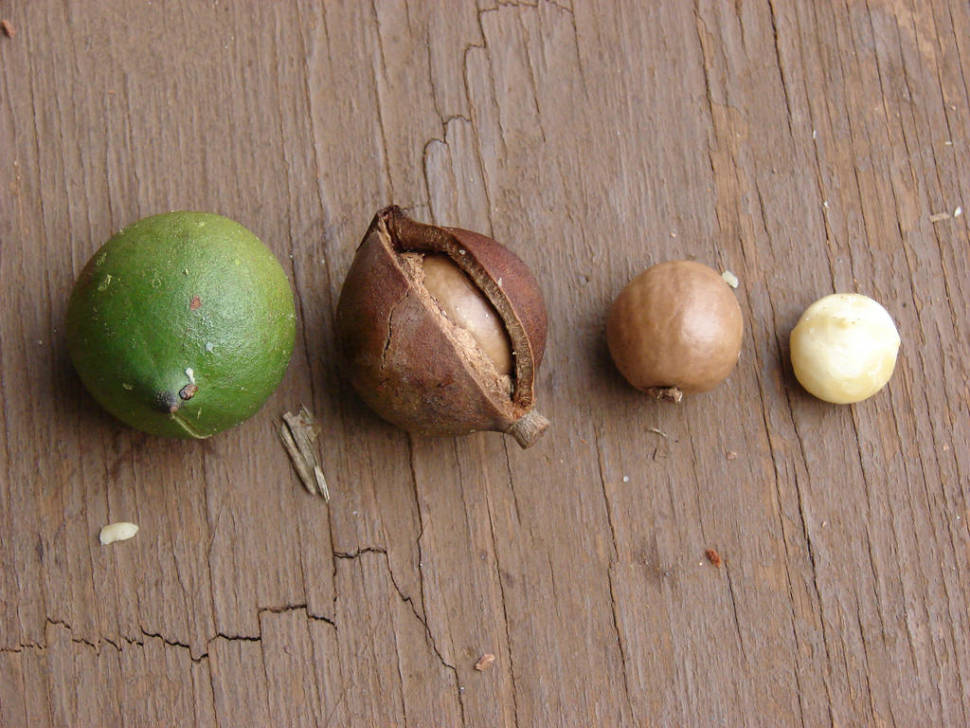 Best time for Macadamia Nuts in New Zealand