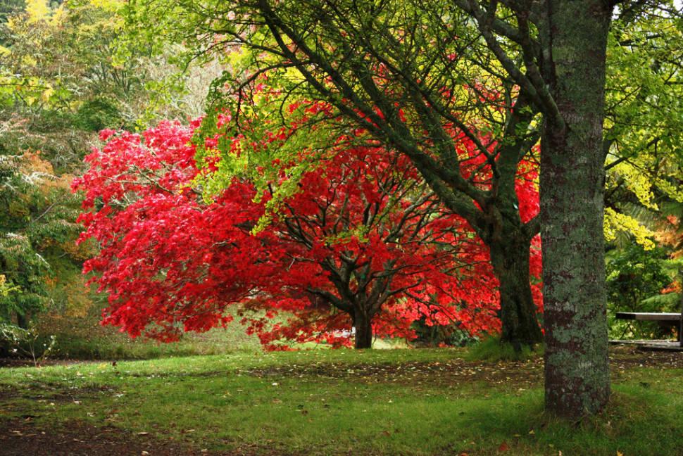 McLaren Falls Park in Autumn in New Zealand - Best Season