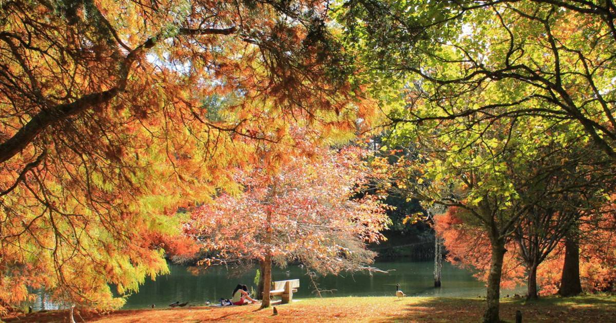 McLaren Falls Park in Autumn in New Zealand - Best Time