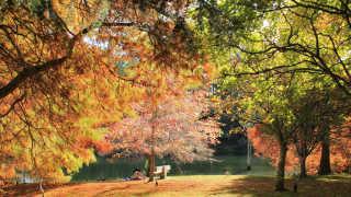 McLaren Falls Park in Autumn