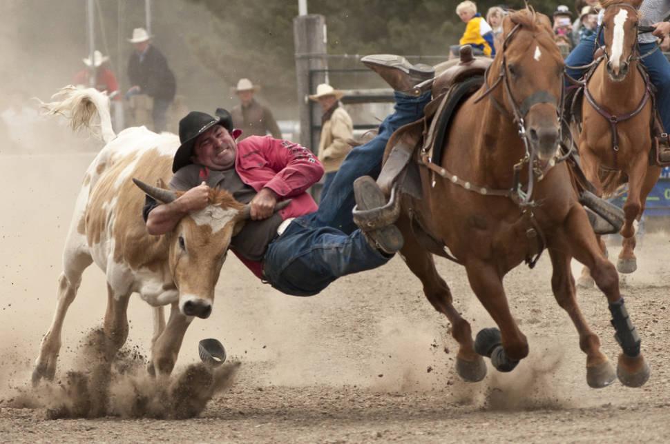 Rodeo in New Zealand - Best Season