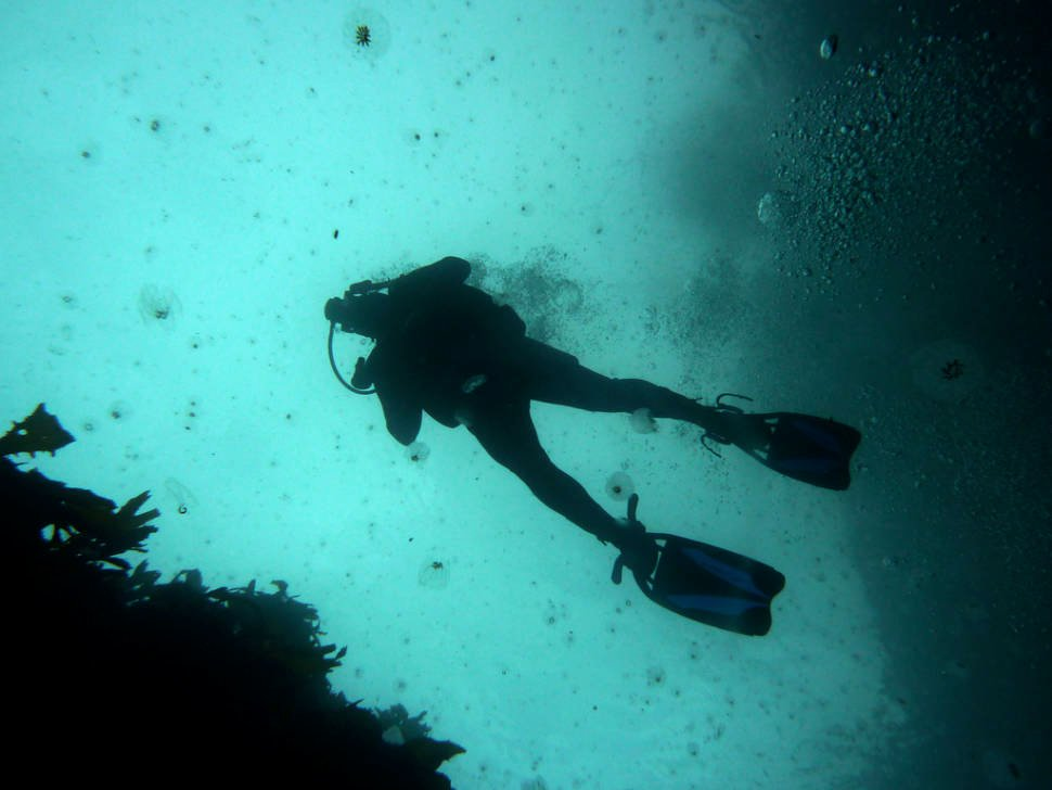 Scuba Diving in New Zealand - Best Time
