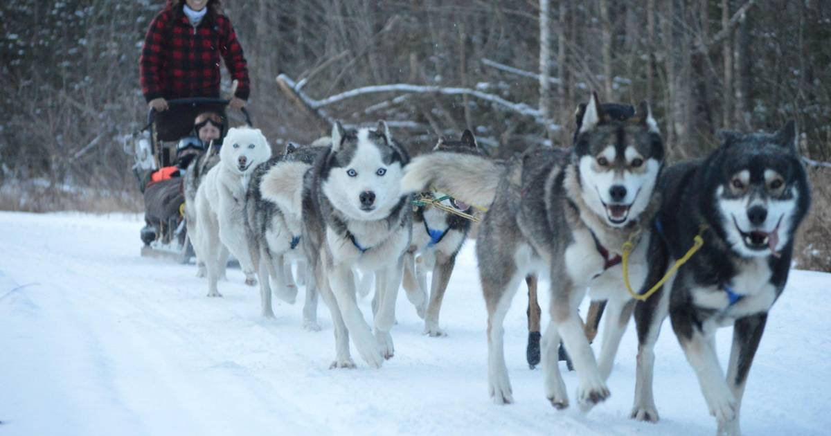 Sled Dog Experience in New Zealand - Best Time