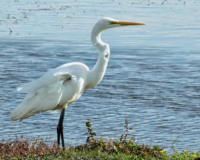 Best time to see The White Heron Sanctuary Tours in New Zealand