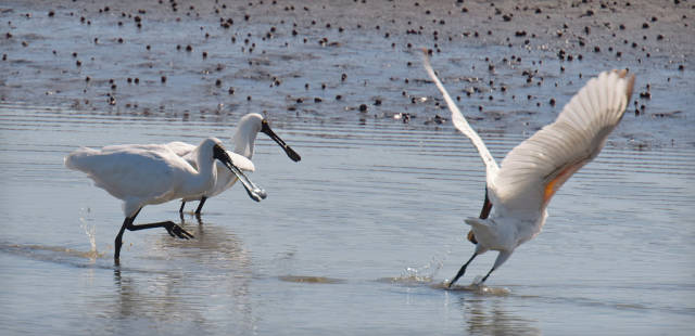 The White Heron Sanctuary Tours in New Zealand - Best Time
