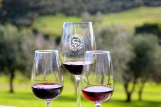 Wine Harvest