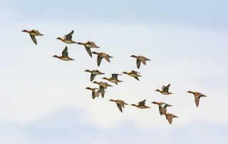 Autumn Migrations