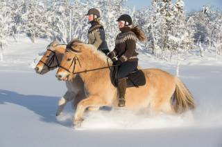 Horse Riding in the Snow