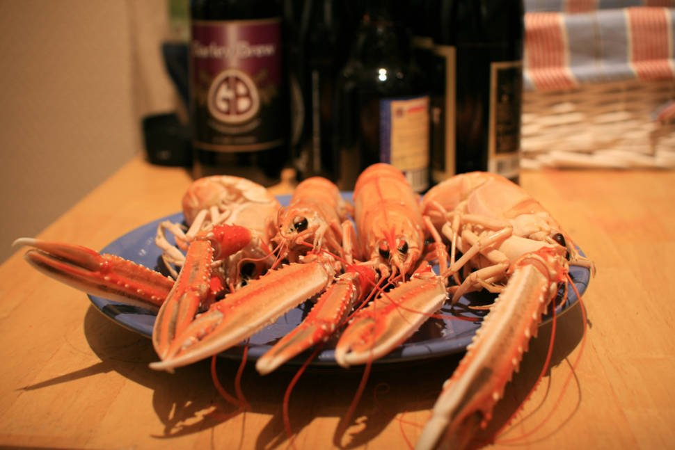Norwegian Lobster in Norway - Best Time