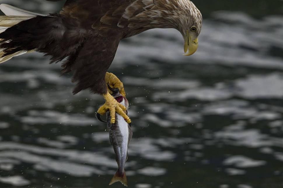 Sea Eagle Safari in Norway - Best Season