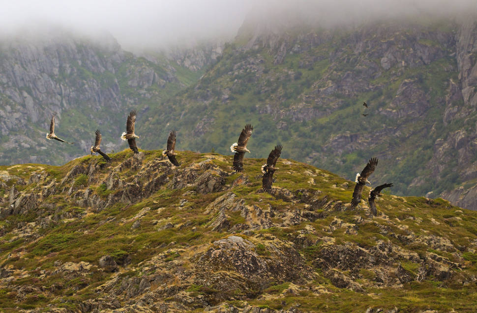 Best time to see Sea Eagle Safari in Norway